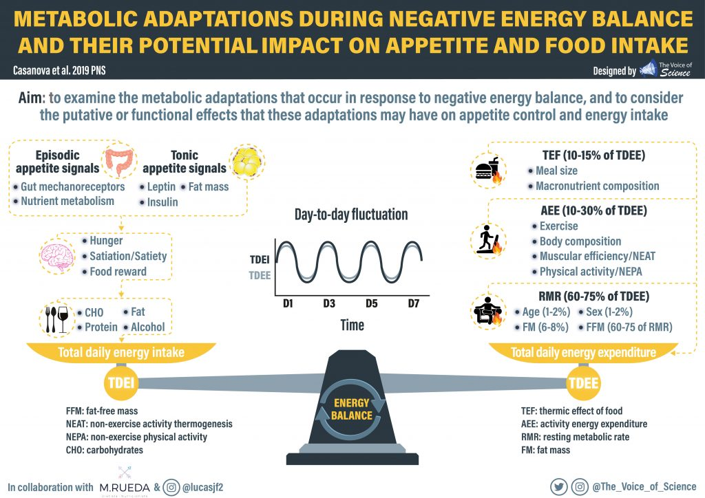 Metabolic adaptations during negative energy balance and their potencial impact on apetite and food intake.